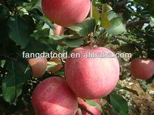 Paper Bag Fuji Apple From Yantai