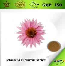 China Best Supplier Qingdao BNP Supply Echinacea Purpurea Herb Extract Cichoric acid