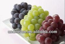 Beat Grape Seed P.E/Vitis vinifera L