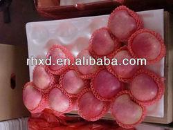 2013 new harvest fresh apple fruit for sale