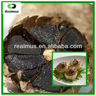 Organic black garlic puree / black garlic paste
