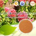 Natural extracto de rhodiola rosea 3% rosavins
