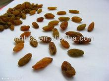 Best Quality and Resonable Price Iranian Golden Raisin