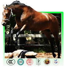 Running animatronic animal horse model