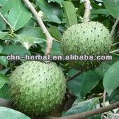 100% natural powder organic graviola fruit p.e. (ISO&KOSHER)