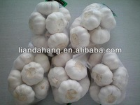 GAP/ KOSHER/ HALAL New Crop Japanese Purple Garlic