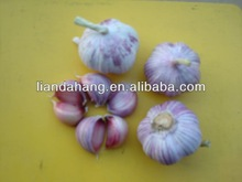 GAP/ KOSHER/ HALAL New Crop Fresh Red Garlic
