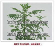 natural artemisinin plant extract