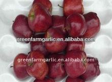 China huaniu fresh apple