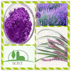 100Percent Natural Top Quality Lavender Extract