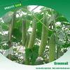 High Yield Crisp Chinese Hybrid F1 Cucumber Seeds