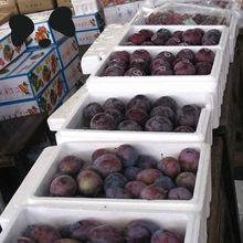 Fresh Black Plum Fruit on hot sale