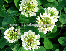 Best Quality Red Clover Extract 60% and 80%isoflavones