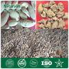 Natural 97% Tannic acid Gallnut plant extract powder