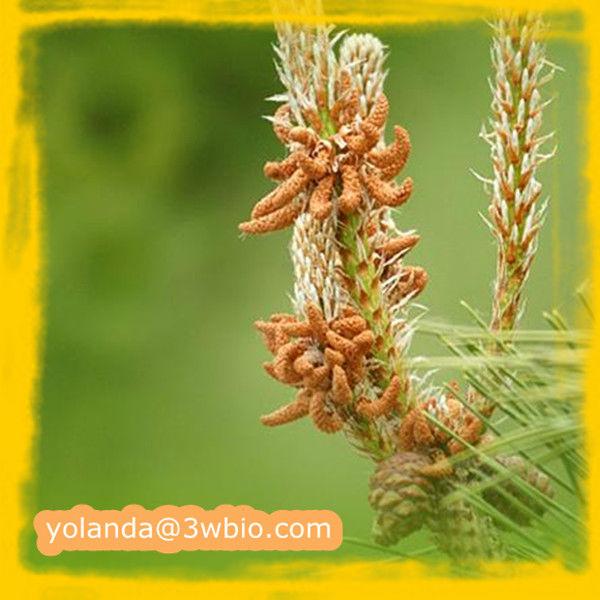 Pinus Massoniana Pollen 100 Pure Pinus Massoniana