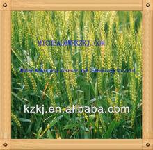prilled ammonium nitrate fertilizer dealers
