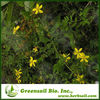2013 Hypericum Perforatum extract (Herbal extract)