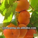 nuovo di alta qualità migliore prezzo cachi freschi frutti per la vendita