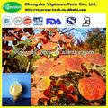 Nombres de las hojas del árbol de smoketree extracto en polvo fisetin 98% 50% 10%