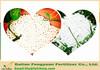 FYF high yield fertilizer soluble boron fertilizer natural borax