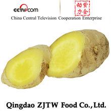 zjtw qingdao, top quality, fresh ginger, 2012 Crop, 100% export standard