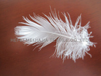 washed 2-4CM white duck feather