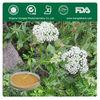 Organic Dahurian Angelica Root Extract Ligustilide >1%,>12%