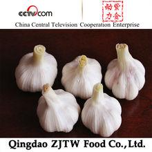 2015 crop super Normal white fresh garlic jiangsu in cold storage 5.0cm up
