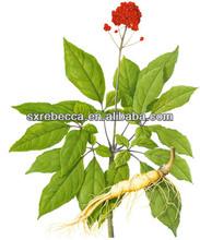 Pure natural herbal panax ginseng extract 5%.10%.20%,80%,HPLC