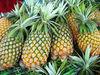 Fresh pineapple ( Tropical fruit)
