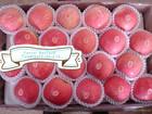 Shandong Yantai Fuji Apple Fruit Crop.2014
