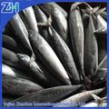 100-150g toda la ronda de pescado congelado bonito para la venta