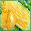 refined corn oil price