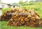 Pygeum Africanum Bark Extract