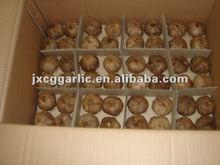 jinxiang success fermented black garlic