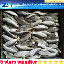 best selling products of frozen mackerel fish whole round