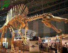 Large science exhibits artificial dinosaur skeleton replicas