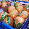 2015 high quality fresh pomelo Fujian Variety
