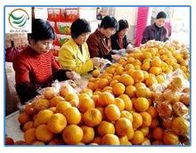 date price mandarin oranges
