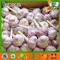 grossista china alho fresco alho branco normal alho