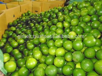 gimex viet nam fresh lemon