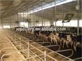 préfabriquées en acier hangar structure de vache