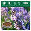 Supply High Quality Lavender Extract