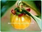 R- The very best price Garcinia cambogia extract 60% HCA/Garcinia cambogia extract 50% HCA