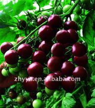 Black Diamond Cherry tomato seeds