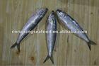 delicious fresh frozen canned sardine