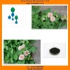 Plant extract Red clover extract powder,extract of red clover powder