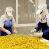 factory supplying brined hot chilli peppers