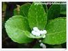 FYF Borate/B Fertilizer/Borax/Borax Fertilizer