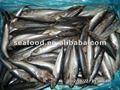Peixe congelado e seafoods